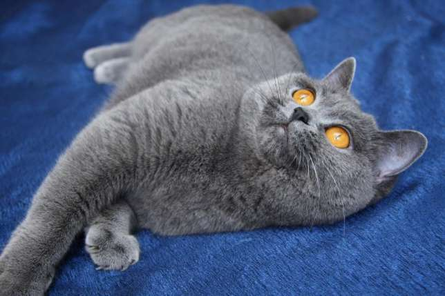 Čierna Womans chlpaté mačička
