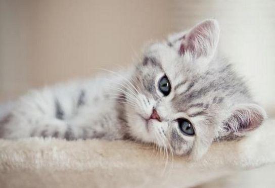 Cara Memanggil Kucing Abu Abu Rekomendasi Untuk Memilih Nama Panggilan Untuk Kucing Domestik
