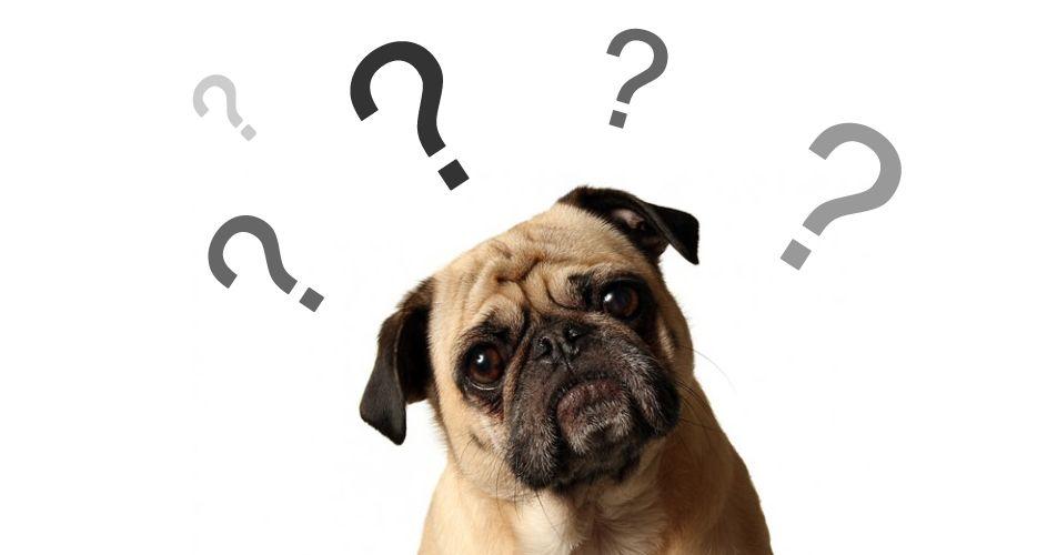Evcil hayvanlar için Ryazan Veteriner Kliniği