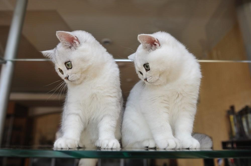 Perfektné tesné mačička
